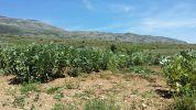 Campo di fava Masseria Passerella