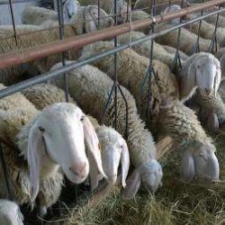 Azienda agricola Bergamo