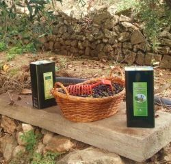 Azienda agricola Manfredonia Foggia