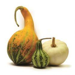 Vendita Zucche ornamentali on-line